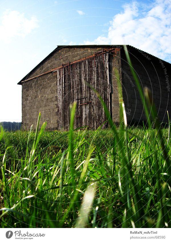 Scheu[Neee] Scheune Gras grün Bauernhof Licht Feld Wolken Stall Schiebetor Dach Mauer Himmel blau Landschaft Graffiti Sonne Lagerhalle