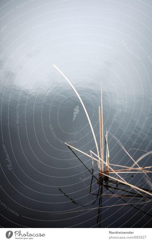 Am See Sinnesorgane ruhig Natur Pflanze Wasser Seeufer Teich dehydrieren blau braun Einsamkeit Ewigkeit stagnierend Stimmung Schilfrohr Stillleben Halm