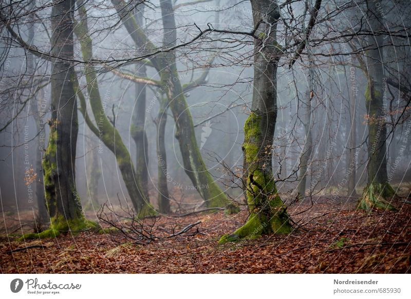 Hexenwald Natur Baum Einsamkeit dunkel Wald Wege & Pfade Stimmung Angst Wetter Nebel Wachstum wandern Ausflug bedrohlich Landwirtschaft gruselig