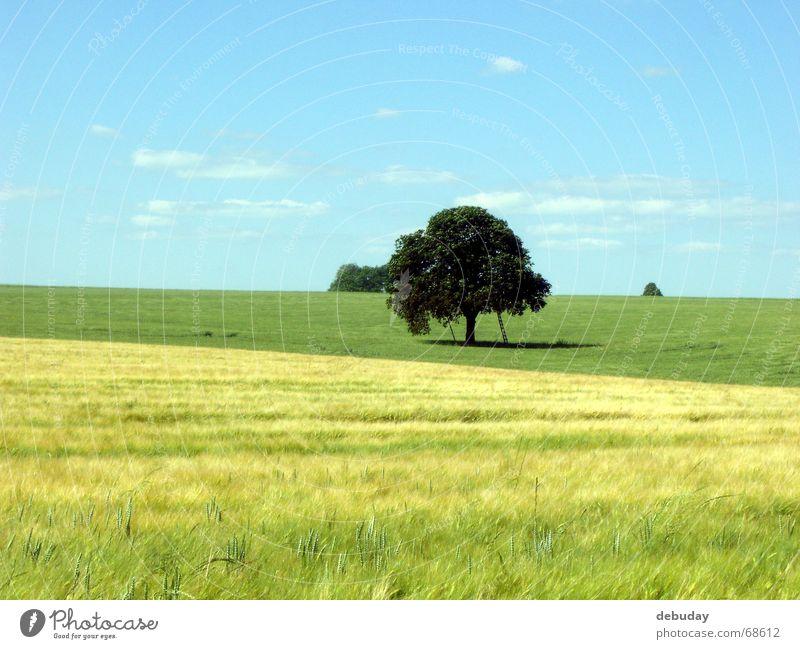 Treffpunkt alt grün Baum Landschaft Ferne gelb Wärme Glück Freiheit Feld Wachstum Aussicht groß Schönes Wetter Romantik rund