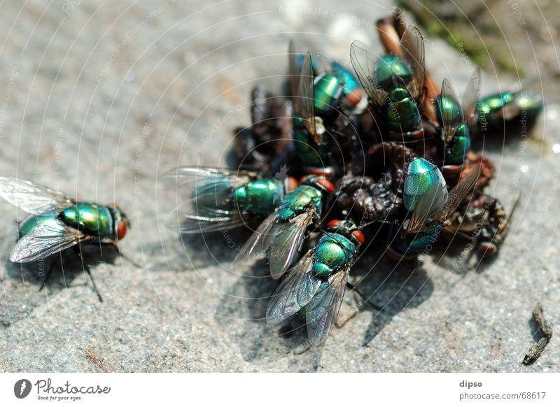 Raubtier-Fütterung Natur grün fliegen Appetit & Hunger Ekel Mahlzeit Anhäufung Steinboden
