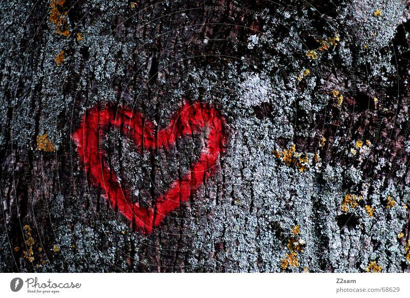 I love rise Natur Baum rot Liebe dunkel Herz schnitzen