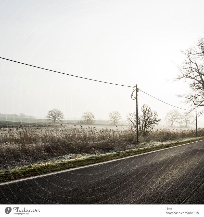 Wetter l Frühdunst Umwelt Natur Landschaft Himmel Nebel Baum Feld Verkehr Verkehrswege Straße Wege & Pfade grau Beginn Ferien & Urlaub & Reisen Asphalt Dunst