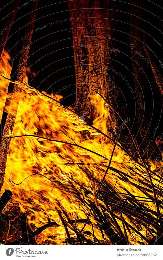 Nahaufnahme Lagerfeuer Winter Natur Feuer Frühling beobachten Aggression ästhetisch bedrohlich heiß gelb Stimmung Macht Warmherzigkeit Abenteuer erleben