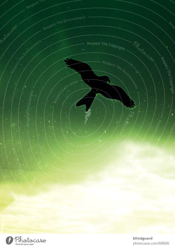 Flugabwehr [1] grün gelb Vogel dreckig Feder Flügel Schutz Fensterscheibe Etikett Schnabel Schwanz Warnhinweis Vorsicht Krallen Falken Greifvogel