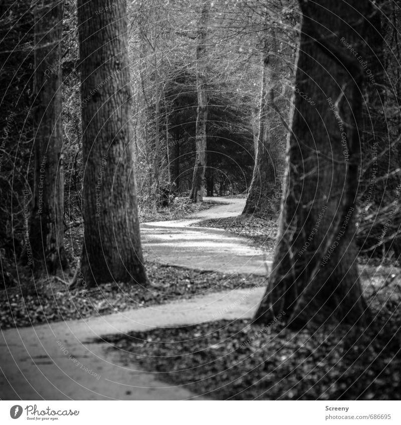 Zick zack Natur Baum Wald Erwartung Gelassenheit Neugier Wege & Pfade Park Neigung tief Zickzack Schwarzweißfoto Außenaufnahme Menschenleer Tag Licht Schatten