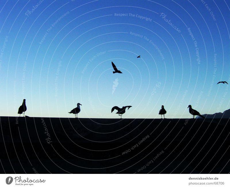 Möööve ya! Himmel blau Strand Tier dunkel Spielen Mauer hell Tanzen Vogel Küste Flugzeug fliegen sitzen Luftverkehr Flügel