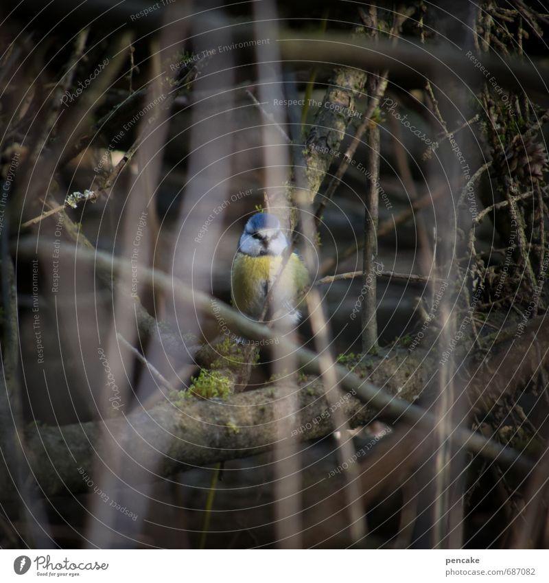 guckuck Natur Landschaft Tier Frühling Vogel Erde Sträucher Urelemente Zeichen entdecken verstecken Sumpf Tarnung Frühlingsgefühle Moor Blaumeise