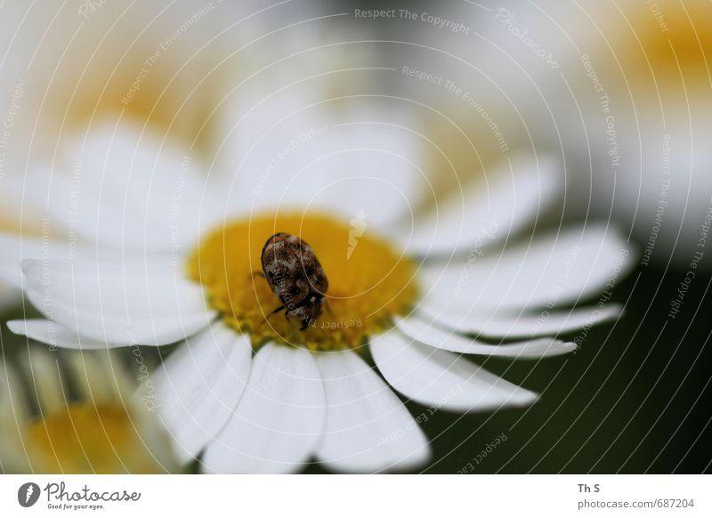 Insekt Natur Frühling Sommer Blüte Tier Wildtier 1 Blühend entdecken ästhetisch Duft elegant schön natürlich Lebensfreude Frühlingsgefühle Freiheit harmonisch