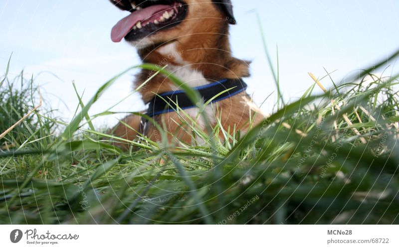Margarete grün Wiese Gras Hund Pause Zunge Erschöpfung