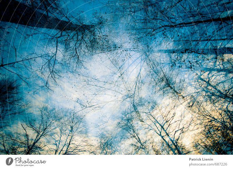 um uns herum harmonisch Zufriedenheit Erholung ruhig Meditation Duft Abenteuer Freiheit Umwelt Natur Landschaft Urelemente Luft Himmel Wetter Baum Wald Beginn