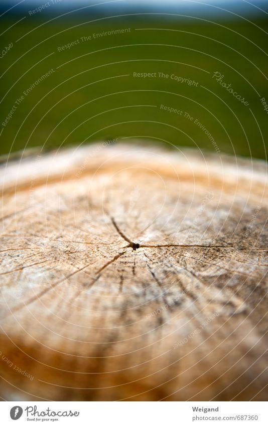 Kreisverkehr und Kreuzung Natur alt Baum ruhig Wald Umwelt Holz Zufriedenheit Feld Kraft Rücken Lebensfreude Baumstamm Reinheit Wahrheit trösten