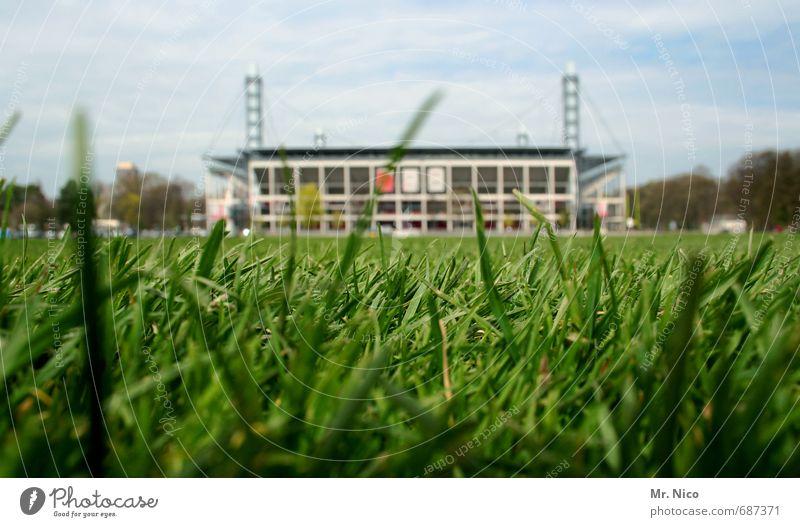 pilgerstätte Ballsport Sportstätten Fußballplatz Stadion Umwelt Natur Himmel Gras Wiese Bauwerk grün Bundesliga Sportveranstaltung Flutlicht Halm
