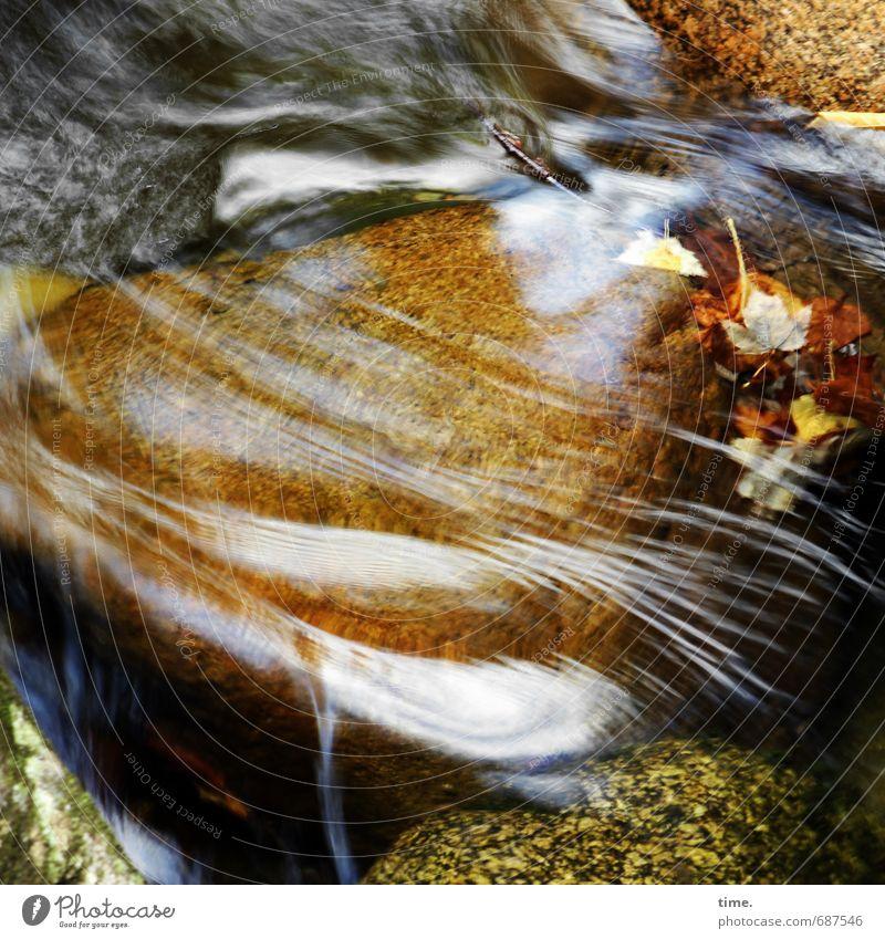 kost.bar | Lebenslinien Umwelt Natur Pflanze Urelemente Wasser Herbst Blatt Felsen Berge u. Gebirge Wasserfall Bach Stein Linie Bewegung authentisch Reinheit