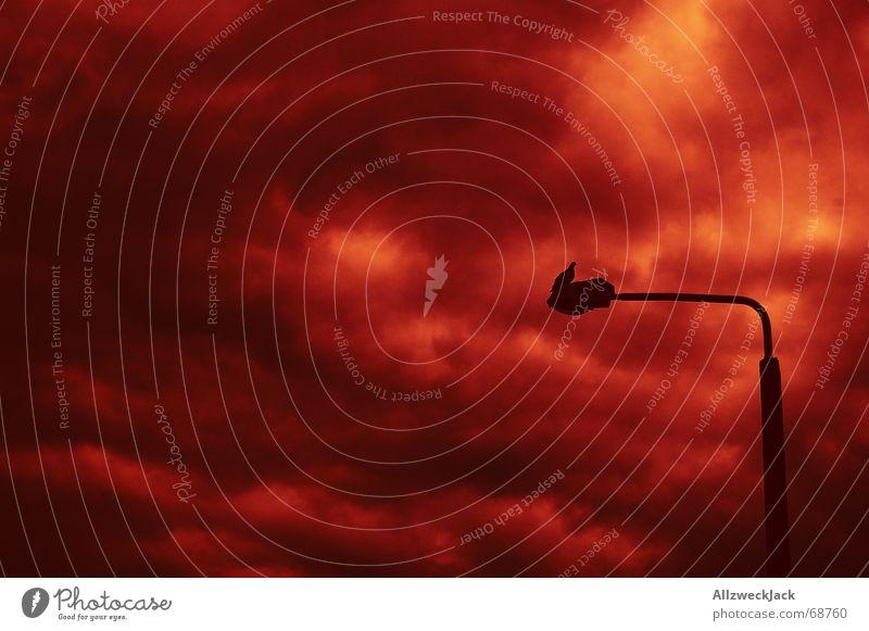 Die eine Taube der  Apocalypse Wolken Angst warten sitzen Trauer beobachten Straßenbeleuchtung Apokalypse dunkle Wolken Roter Himmel