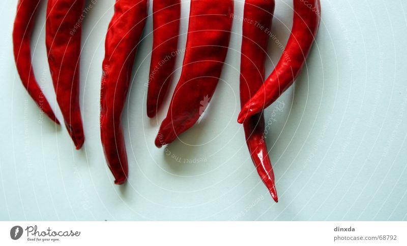 abbe schoten Schote Paprika rot feurig heiß Physik Küche Lebensmittel Kräuter & Gewürze Chili Brand Scharfer Geschmack Wärme