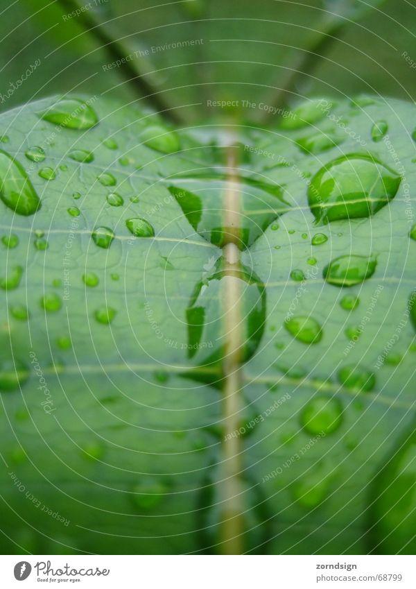 Morgentau grün Blatt Pflanze Licht feucht Spiegel Wassertropfen nass Seil Regen