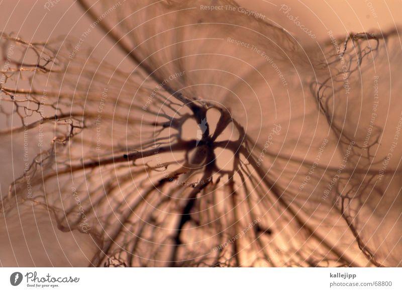 netzwerk Makroaufnahme Hülse Verpackung Netz verästelt Bioprodukte Tod getrocknet Schalen & Schüsseln Natur Detailaufnahme Netzwerk kallejipp