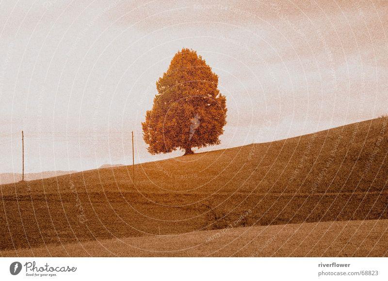 Schweizer Weide Himmel Baum Farbe Wiese Landschaft Feld altmodisch