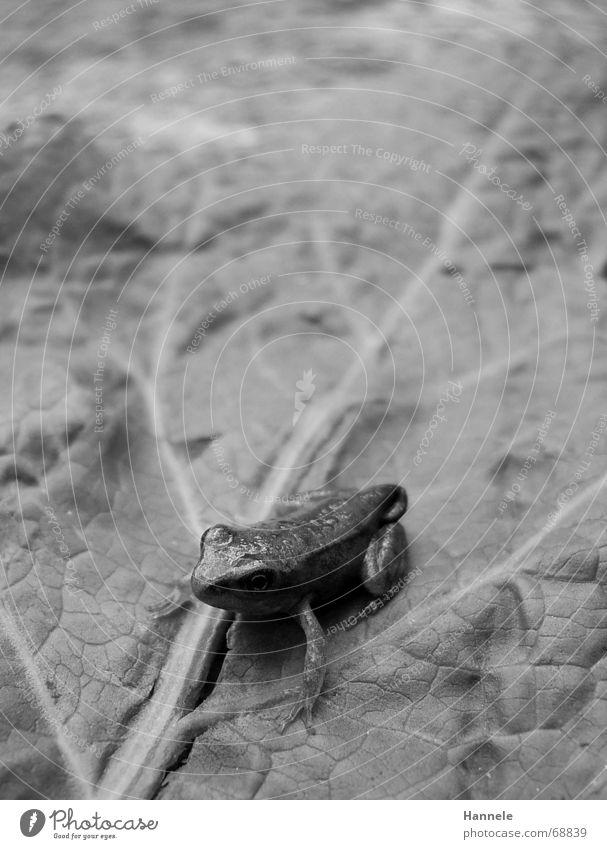 froggy Tier Lurch hüpfen grün Blatt Glätte nass Frosch hüpfer stringen Natur Wasser