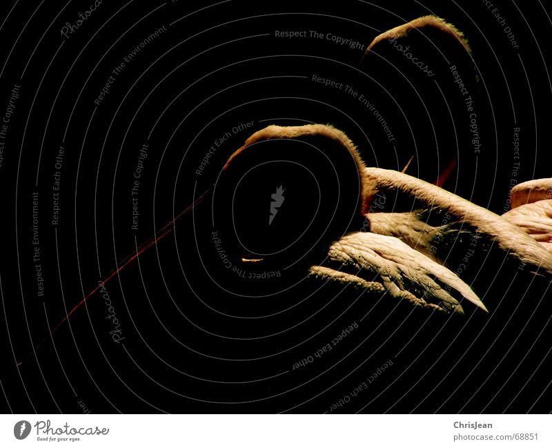 Zweisam Tier Pelikan Vogel Vogelkopf Schnabel Feder Denken bearbeitet dunkel schwarz Studioaufnahme Zusammensein 2 pelican Stolz reines gewissen animal bird