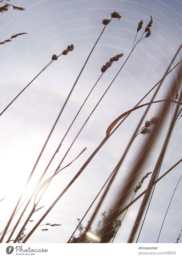 Lichthalme Himmel Natur Pflanze Sonne Ferien & Urlaub & Reisen Sommer Wolken Erholung Umwelt Gefühle Gras Wind frei Klima Sträucher Schönes Wetter