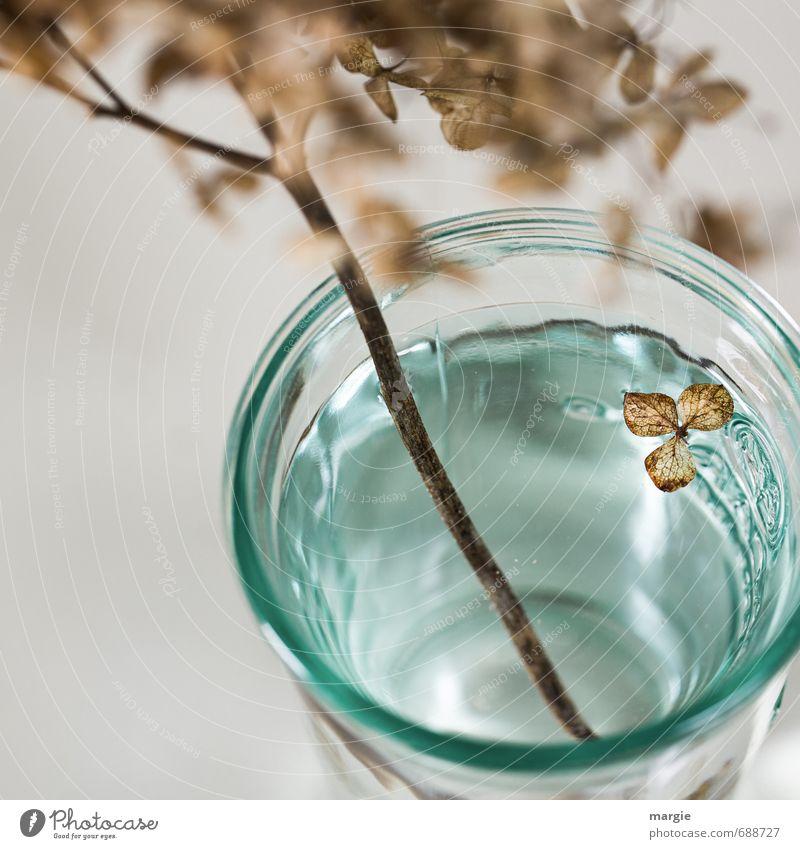 Total vergessen Wasser Pflanze Blume Blatt Blüte Hortensie alt Blühend fallen verblüht dehydrieren braun türkis Gefühle Traurigkeit Enttäuschung Einsamkeit