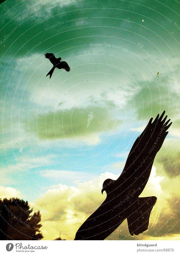 Flugabwehr [2H] grün gelb 2 Vogel dreckig Feder Flügel Schutz Fensterscheibe Etikett Schnabel Schwanz Warnhinweis Vorsicht Tier Krallen