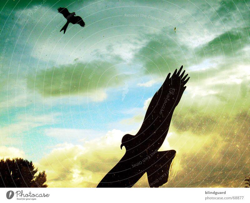 Flugabwehr [2Q] grün gelb 2 Vogel dreckig Feder Flügel Schutz Fensterscheibe Etikett Schnabel Schwanz Warnhinweis Vorsicht Tier Krallen