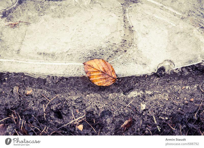 Einsames Blatt auf Eisscholle Natur alt schön Wasser Winter dunkel kalt Wald Senior Tod braun Stimmung liegen Erde