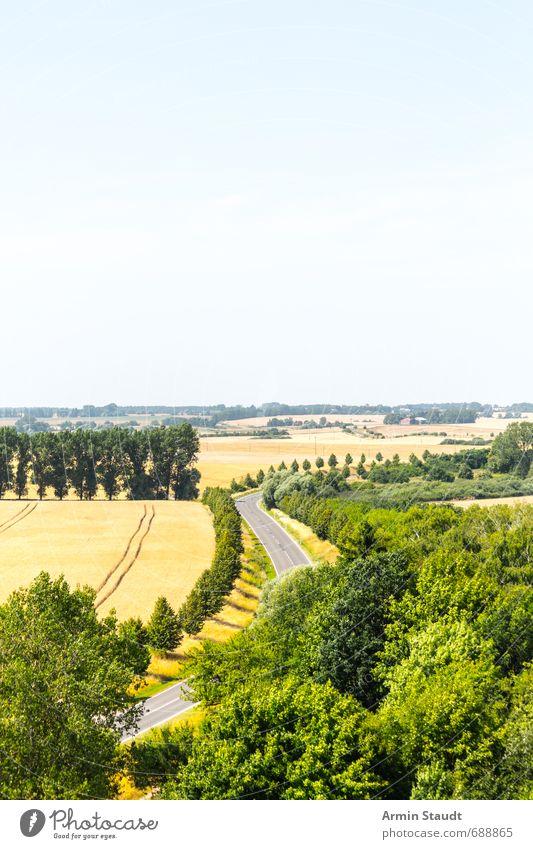 Landschaft mit Straße Ferien & Urlaub & Reisen Umwelt Natur Pflanze Wolkenloser Himmel Sommer Schönes Wetter Feld Wald Mecklenburg-Vorpommern Verkehrswege