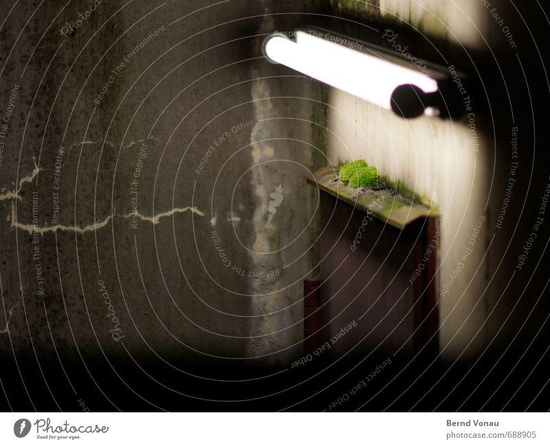 nachtleben Nacht Neonlicht Licht Außenaufnahme Kunstlicht Moos Tür dreckig Eingang Putz grün grau schwarz Kultur Pflanze Beleuchtung dunkel Einsamkeit