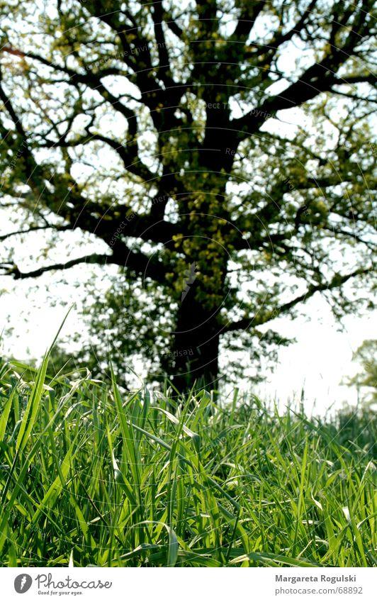 Grünes Gras Baum grün Wiese Halm Natur Weide Außenaufnahme