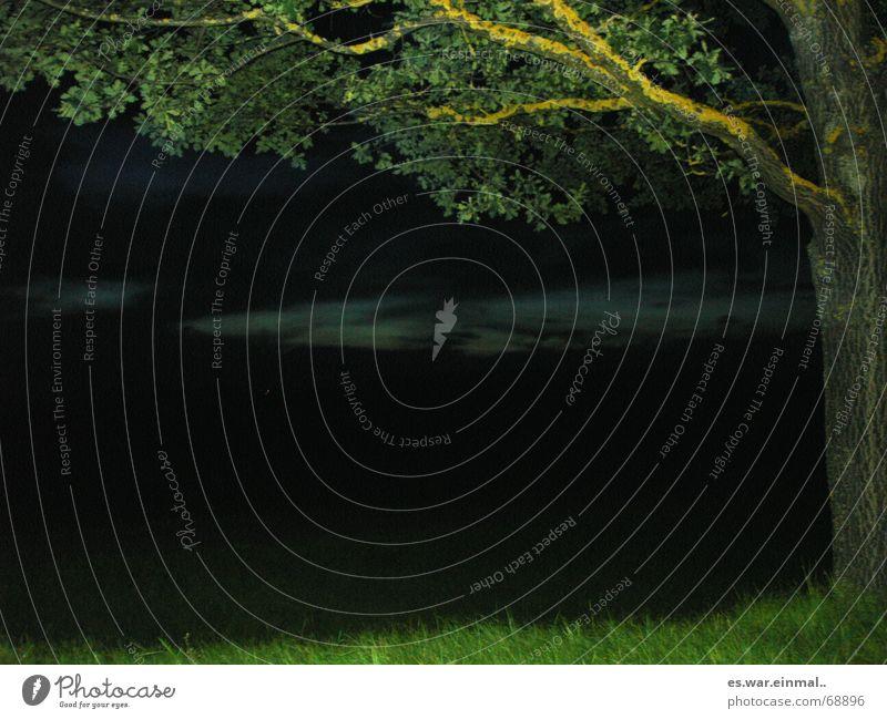 eine autofahrt ins ungewisse. alt Baum grün ruhig Blatt schwarz Wolken dunkel Wiese Gras braun Kraft wandern Wachstum Nachthimmel Ast