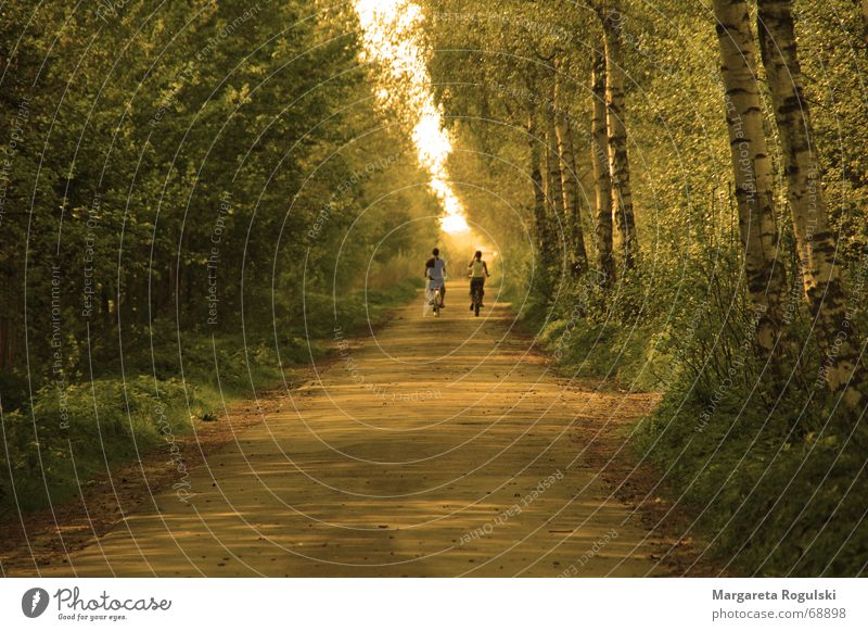long walk home Baum Horizont Wald Fahrrad Herbst Wege & Pfade Natur Sonne