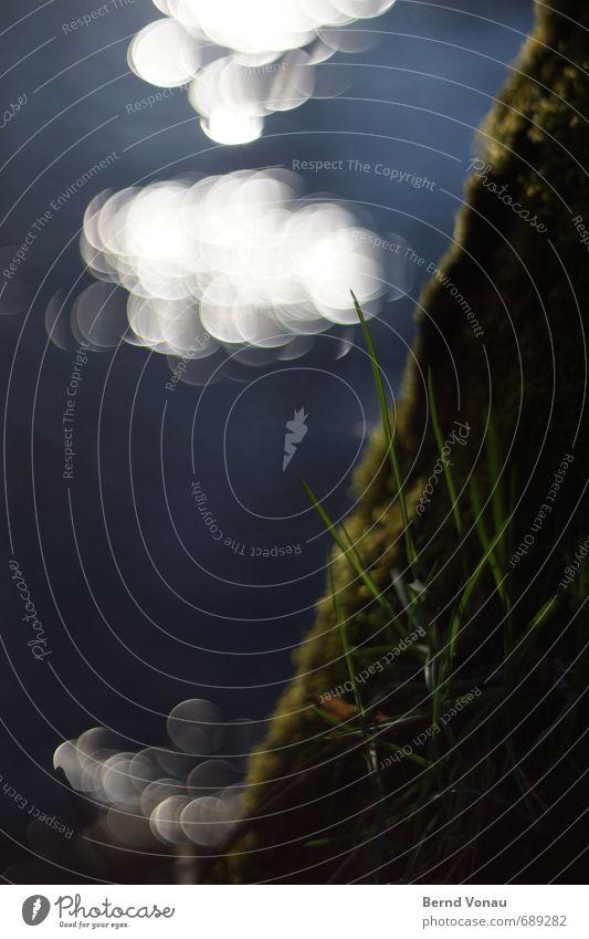 Wasserwölkchen Bach Bachufer Unschärfe Frühling Wachstum blau grün schwarz Gras Moos Wolken Reflexion & Spiegelung Kreis Gegenlicht Sonne Tag Außenaufnahme