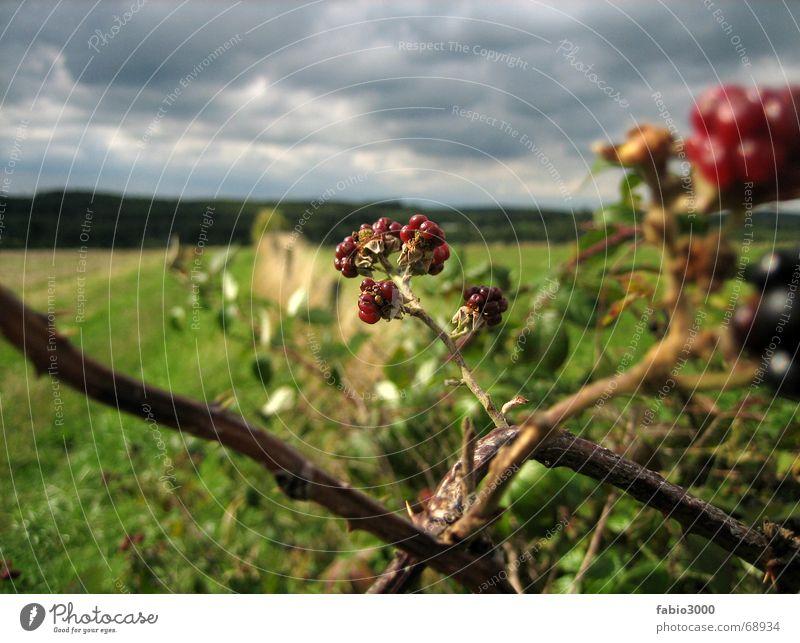 Kraft der Natur Wolken Wiese eigenwillig Himbeeren Feld Stoppelfeld Himmel Wetter Gewitter Amerika brombeer Brombeeren Regen Kontrast gedern