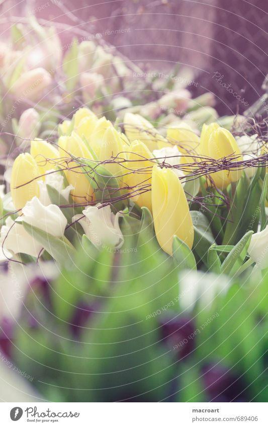 Frühling Tulpe Blume gelb Pflanze Blumenstrauß Muttertag Valentinstag grün Geburtstag Hochformat Blühend Blüte