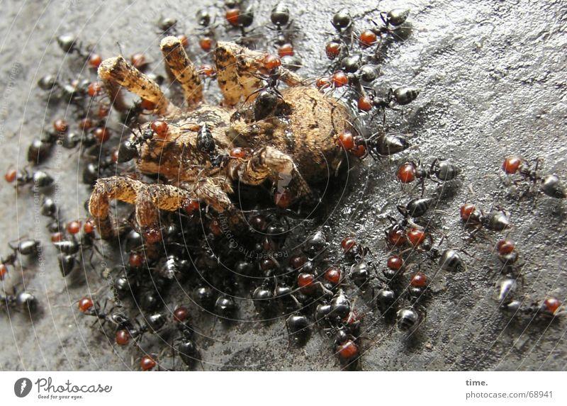 Vorspeisenplatte Natur Ernährung Italien Appetit & Hunger lecker böse Ekel Spinne Biologie Ameise Herz-/Kreislauf-System entsorgen David und Goliath Vorspeise igitt