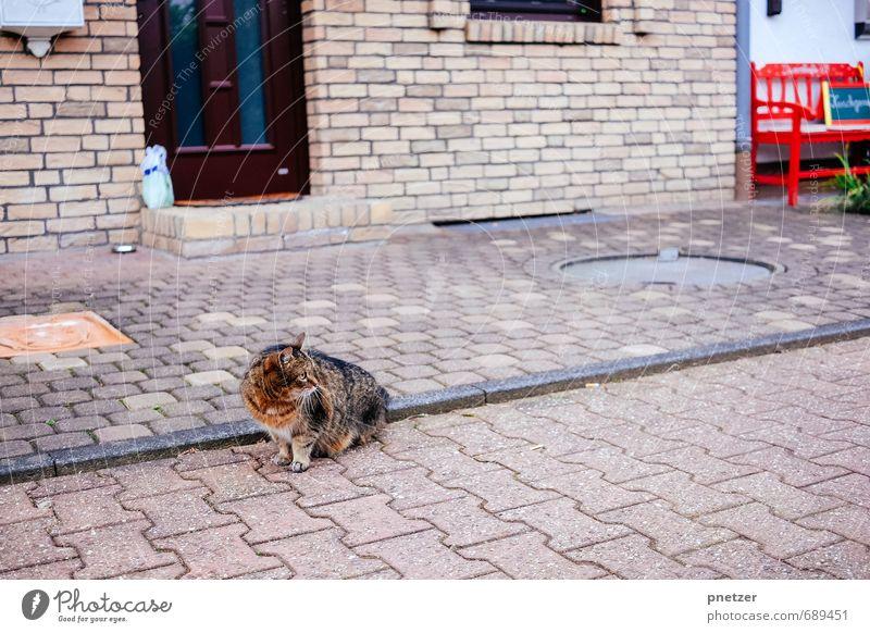 Die rote Bank Kleinstadt Stadtrand bevölkert Haus Mauer Wand Tier Haustier Wildtier Katze 1 Jagd frei Abenteuer Farbfoto Gedeckte Farben mehrfarbig