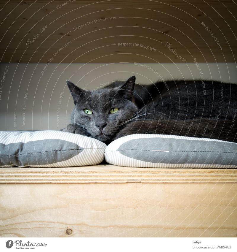 der Denker Katze Erholung ruhig Tier Gefühle Holz Denken Stimmung träumen liegen Zufriedenheit warten weich Pause Schutz Gelassenheit