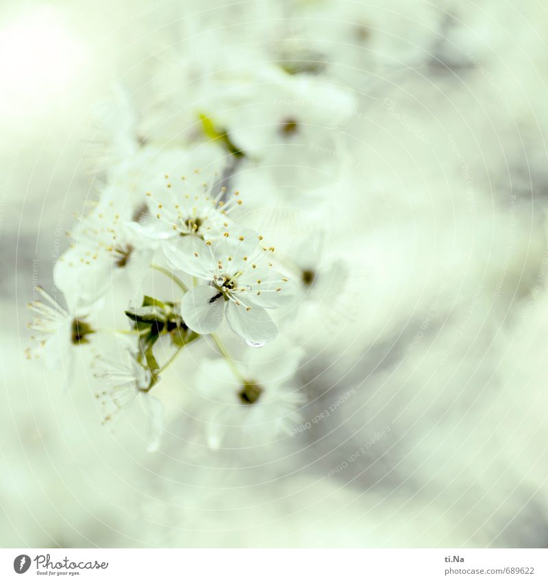 Erstes 2014 | Winterpause adé Umwelt Natur Pflanze Tier Frühling Baum Sträucher Blüte Nutzpflanze Wildpflanze Garten Park Blühend Duft verblüht Wachstum frisch