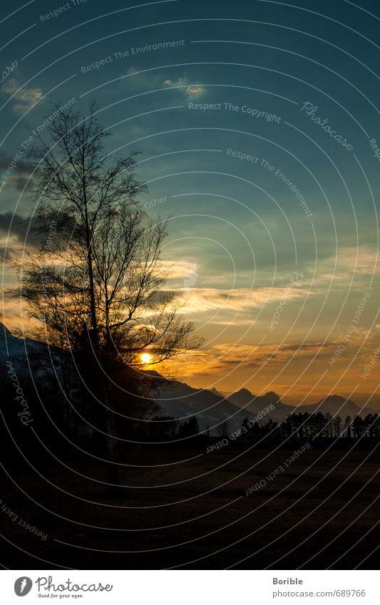 Tree n Sunset Himmel Natur Ferien & Urlaub & Reisen blau schön Sonne Baum Erholung Landschaft Wolken Tier schwarz gelb Umwelt Wärme Wiese
