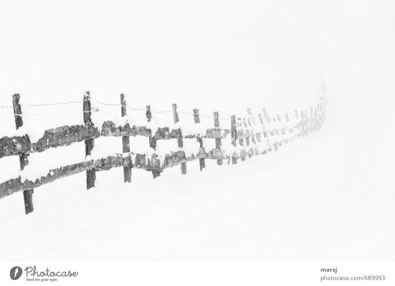 Noch nicht ganz vorbei Winter Schnee Natur schlechtes Wetter Nebel Eis Frost Schneefall Zaun Zaunpfahl Grenze Begrenzung Holz alt bedrohlich dunkel authentisch