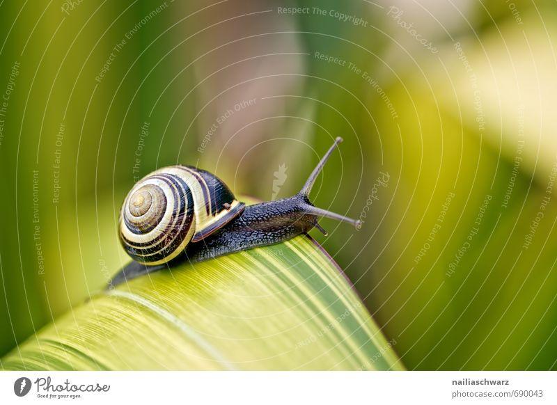 Schnecke im Garten Pflanze Tier Frühling Blatt Antenne rennen beobachten entdecken genießen krabbeln Freundlichkeit Fröhlichkeit natürlich Neugier niedlich