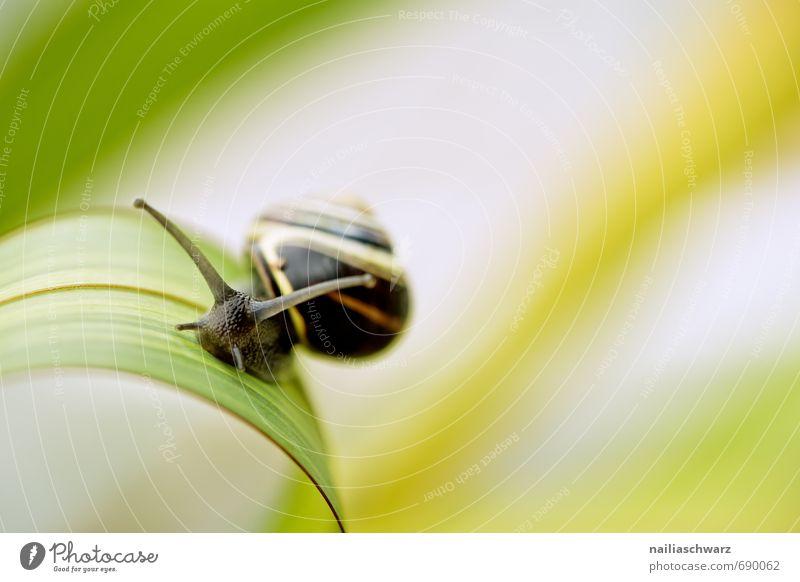 Schnecke im Garten schön Sommer Blatt Tier schwarz gelb Bewegung Frühling natürlich niedlich Neugier Ziel anstrengen Interesse Spirale