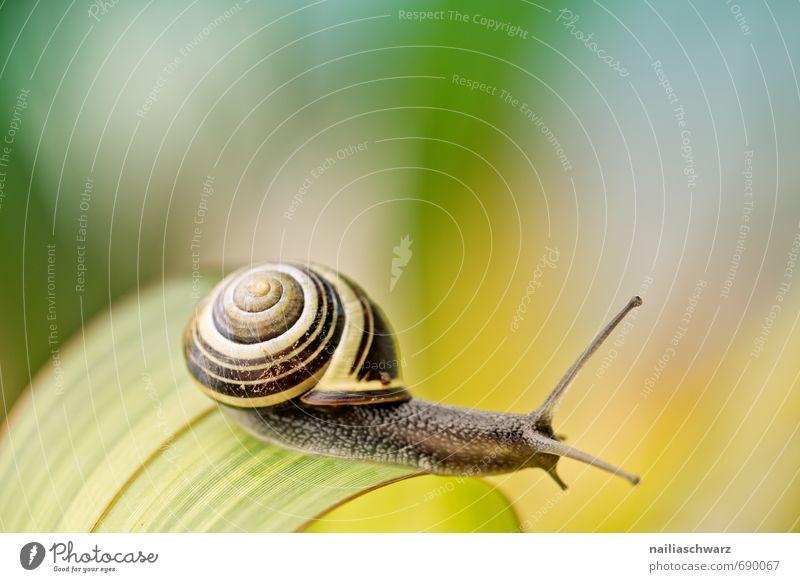 Schnecke im Garten Tier Blatt Antenne berühren entdecken krabbeln Fröhlichkeit schön natürlich Neugier niedlich positiv gelb schwarz Freude Frühlingsgefühle