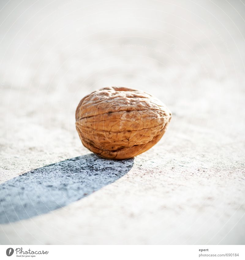 Nuss Walnuss ästhetisch einfach hell Natur Schutz essbar Hülle Nussschale Süßwaren Snack Farbfoto Außenaufnahme Nahaufnahme Schwache Tiefenschärfe