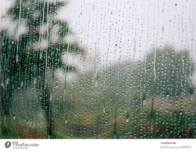 BEI UNS REGNETS Baum Traurigkeit Regen Wetter Trauer trist Gewitter Verzweiflung Fensterscheibe Durchblick schlechtes Wetter Niederschlag