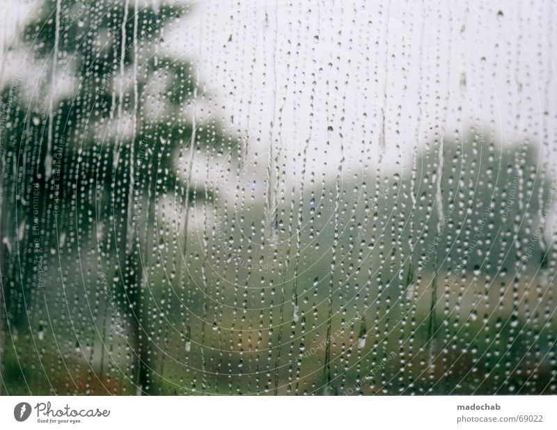 BEI UNS REGNETS schlechtes Wetter Baum Durchblick Trauer trist Gewitter Verzweiflung Regen Fensterscheibe Niederschlag zu hause bleiben Unschärfe madochab